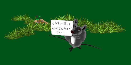 おばさんウサギなのよ b.jpg